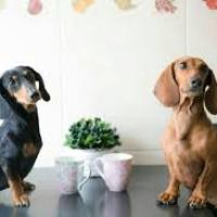 ¿Cuantos perros son? - ¿QUE TANTO CONOCES A LAS MASCOTAS DE LOS POLINESIOS?