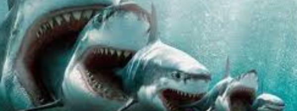 Preguntas y respuestas: ¿Cuánto sabes sobre tiburones? 🦈