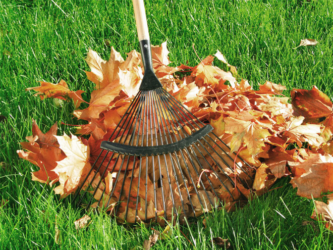 Fall Yard Clean Up Cost