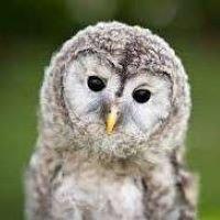 Owl's Nest Sanctuary for Wildlife