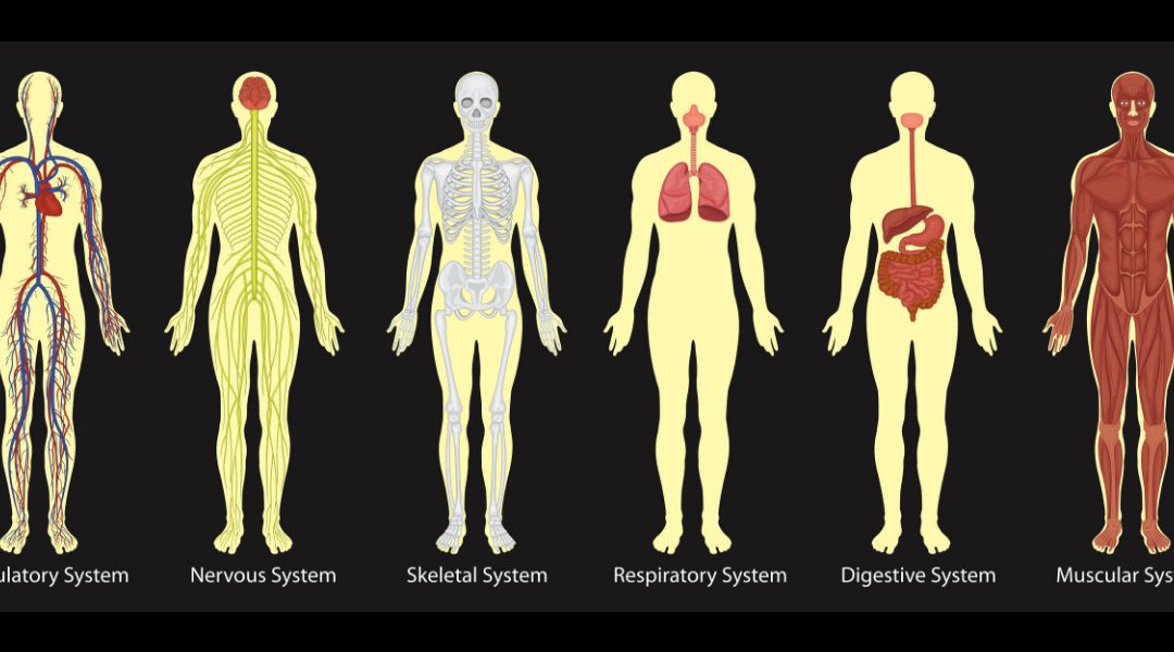 Immune System Deterioration With Age Explained