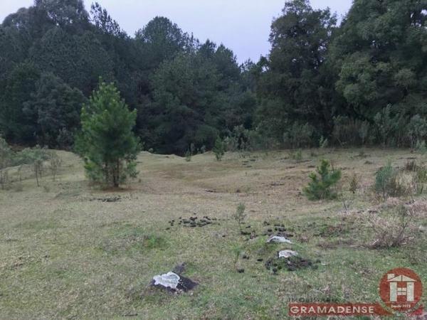Imovel-area-de-terra-gramado-%c3%81r03332-31730