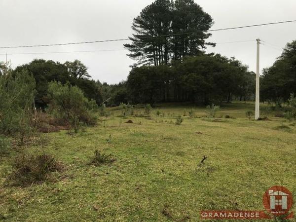 Imovel-area-de-terra-gramado-%c3%81r03332-31739