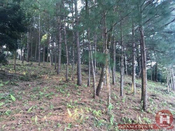 Imovel-area-de-terra-gramado-%c3%81r03747-41012