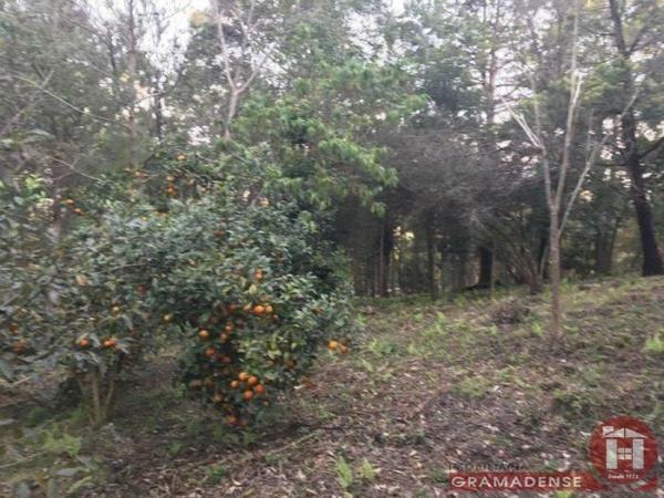 Imovel-area-de-terra-gramado-%c3%81r03747-41017