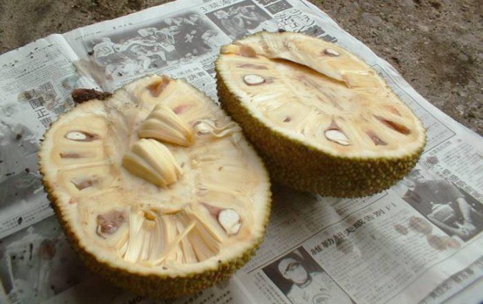 Open Jackfruit