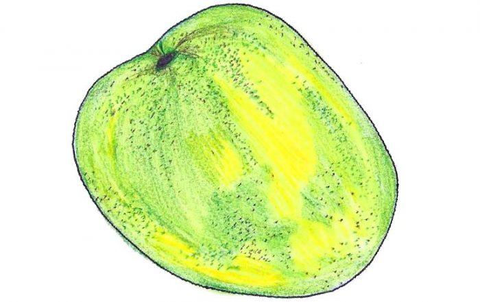 Mulgoba Mango