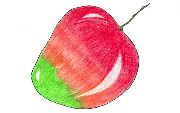 Pairi Mango