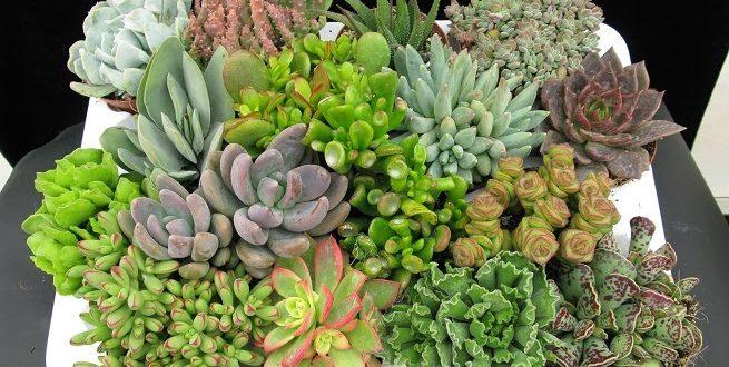Itavi red de productores de plantas que crea empresarios for Suculentas santiago