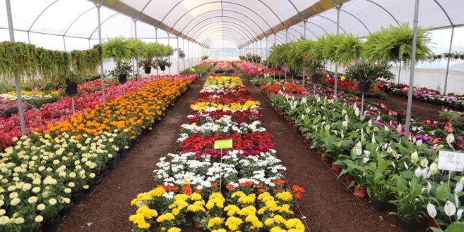 Ven en plantas de ornato oportunidad comercial de m xico for Viveros de plantas de ornato