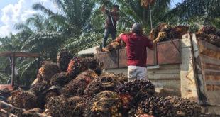 Planta extractora de aceite de palma africana en chiapas