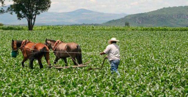 Van Por Mismo Presupuesto Para El Sector Agropecuario