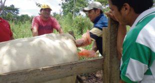 inseminación artificial – Info Rural