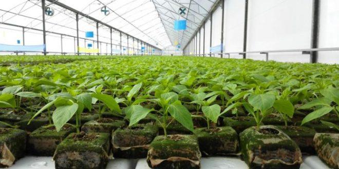 Invernaderos anuncia expansi n de su planta en corregidora for Jardineria queretaro