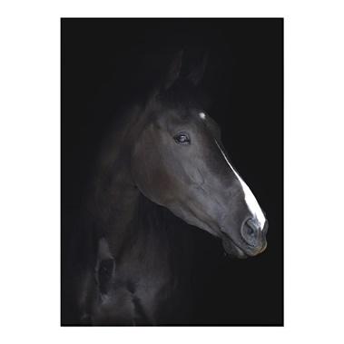 Headshot Portrait Of A Black Horse Wall Art