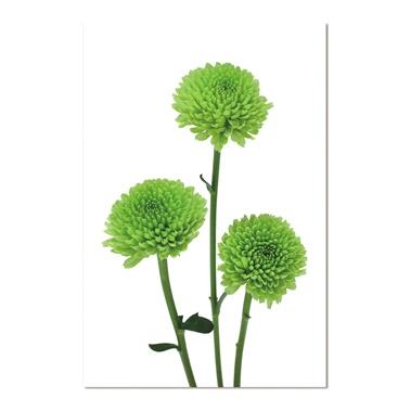 Green Flowers Trio