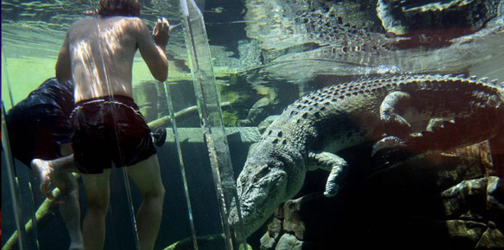 Crocodile, África