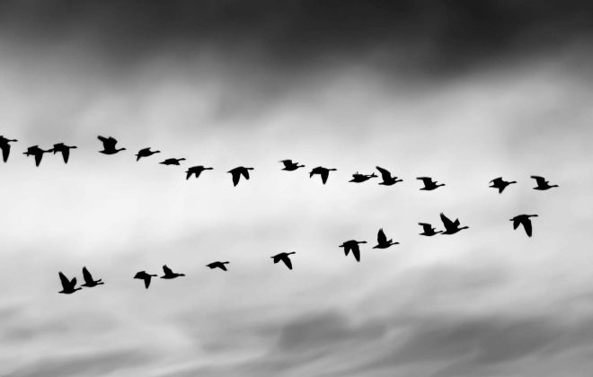Importance of Leadership Geese Image