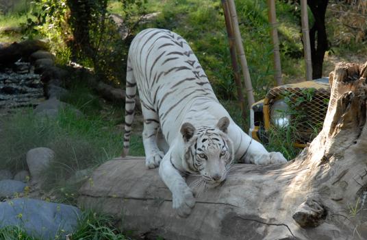 Convenio Buin Zoo