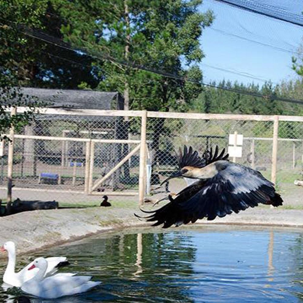 Convenio Animals Park