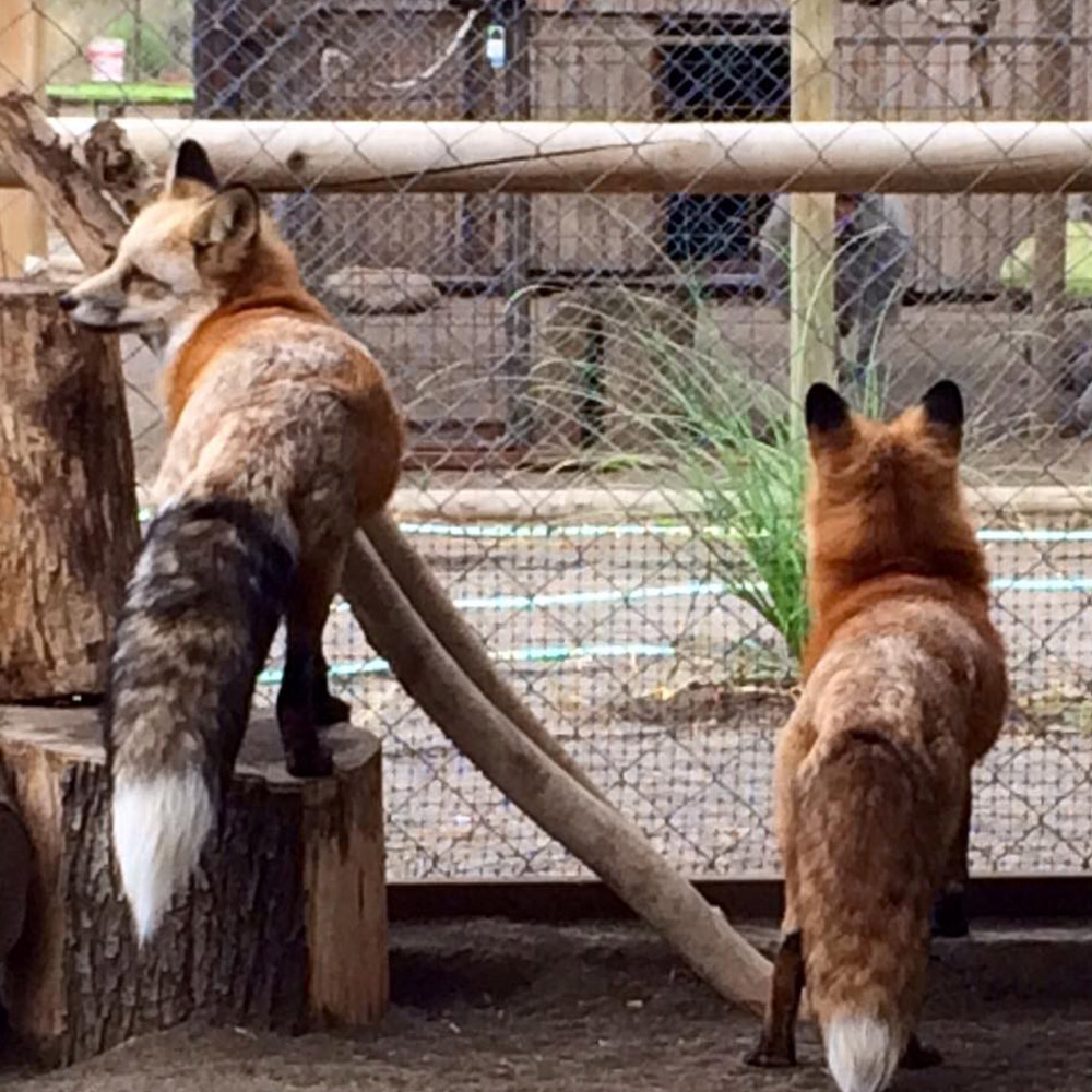 Convenio Animal's Park