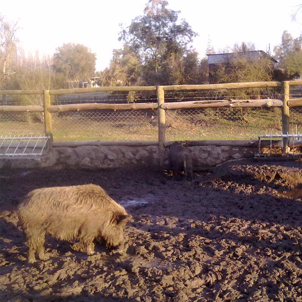 Convenio Lampa Zoo