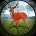 Hunting 2020