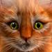 My Kitten (Virtual Pet)