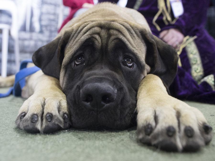 United Airlines Bans 48 Dog Amp Cat Breeds After Pet Deaths
