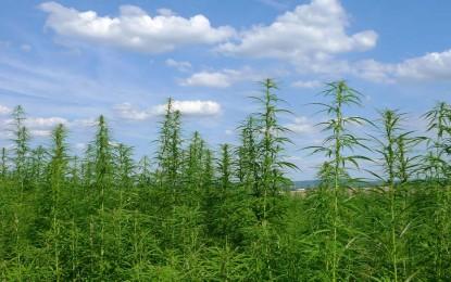 Cannabis en Medicina: Ciencia, Alivios y otras Yerbas