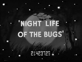 Night Life of the Bugs