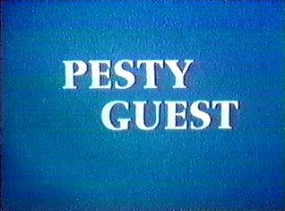 Pesty Guest