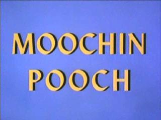 Moochin Pooch