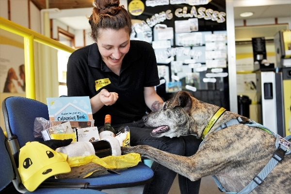 Seek and Sniff is launching again at Dogs Trust Shoreham!