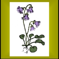 Alpine Garden Society - East Surrey Group logo