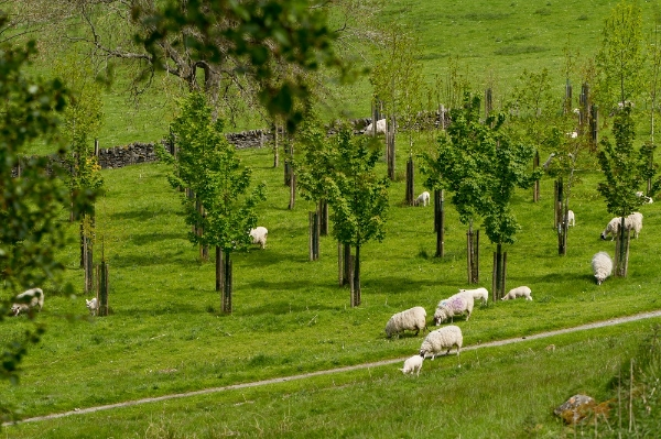 Agroforestry Workshop: Practical design for your farm