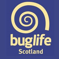 Buglife Scotland logo