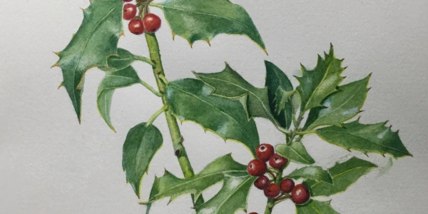 Create your own Christmas Card in coloured pencil