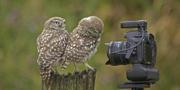 Wildlife Photography, 16-25