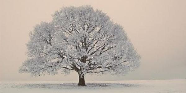 Die Winterreise - A Winter's Journey