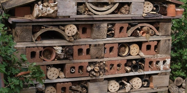 Bug hotel building in Ryhope