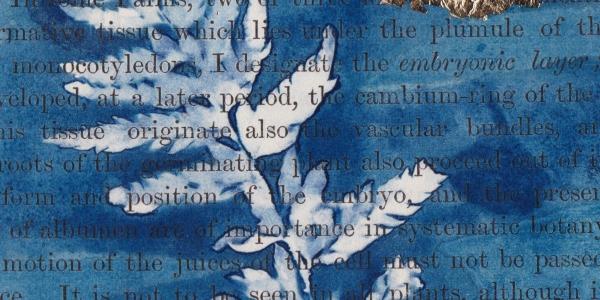 Cyanotype Printmaking Alternative Photography