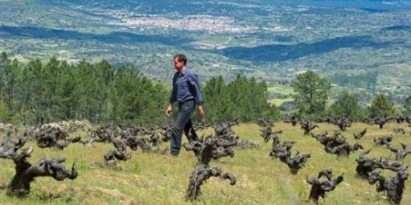 Meet the winemaker: Daniel Ramos - Spanish Wine Tasting