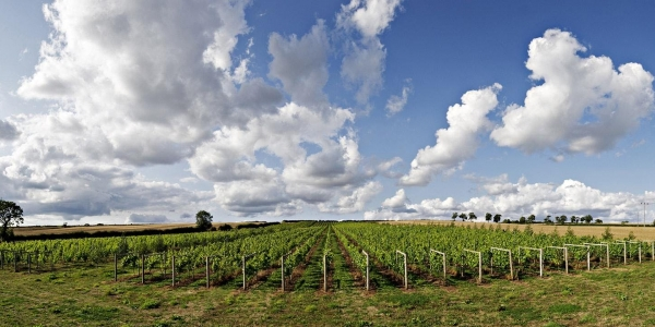 Vineyard tour and wine tasting - Burton on the Wolds, Leicestershire