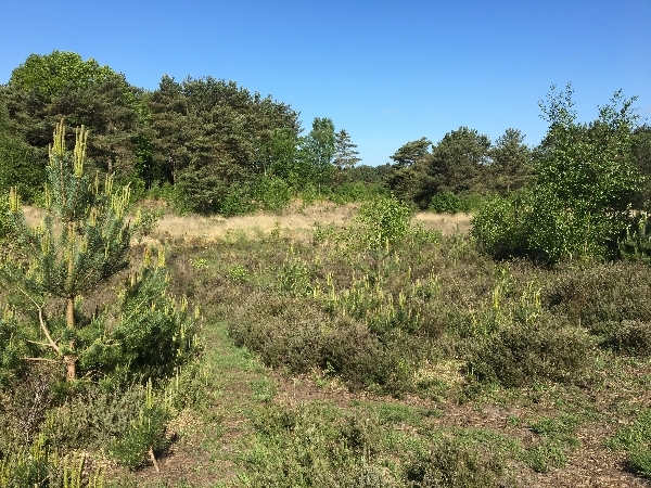 Sunday 11th Volunteer Conservation Working Party