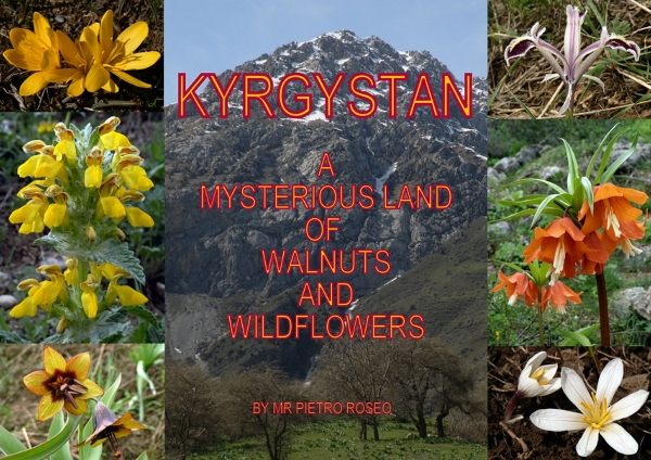 Kyrgyzstan -  A Mysterious Land of  Walnuts and Wildflowers