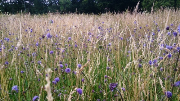 Wildflower meadow survey