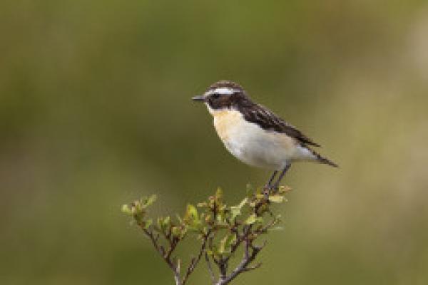 BTO Scotland virtual bird identification training - Wednesdays