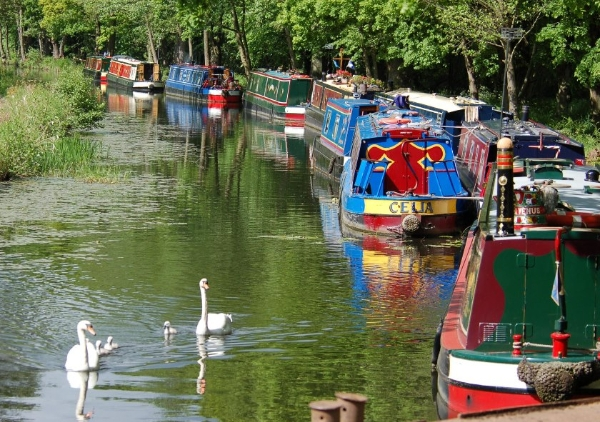 Can you help the Basingstoke Canal?