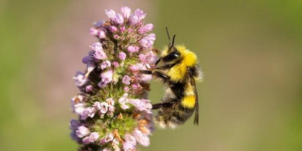 Pollinator ID Training day